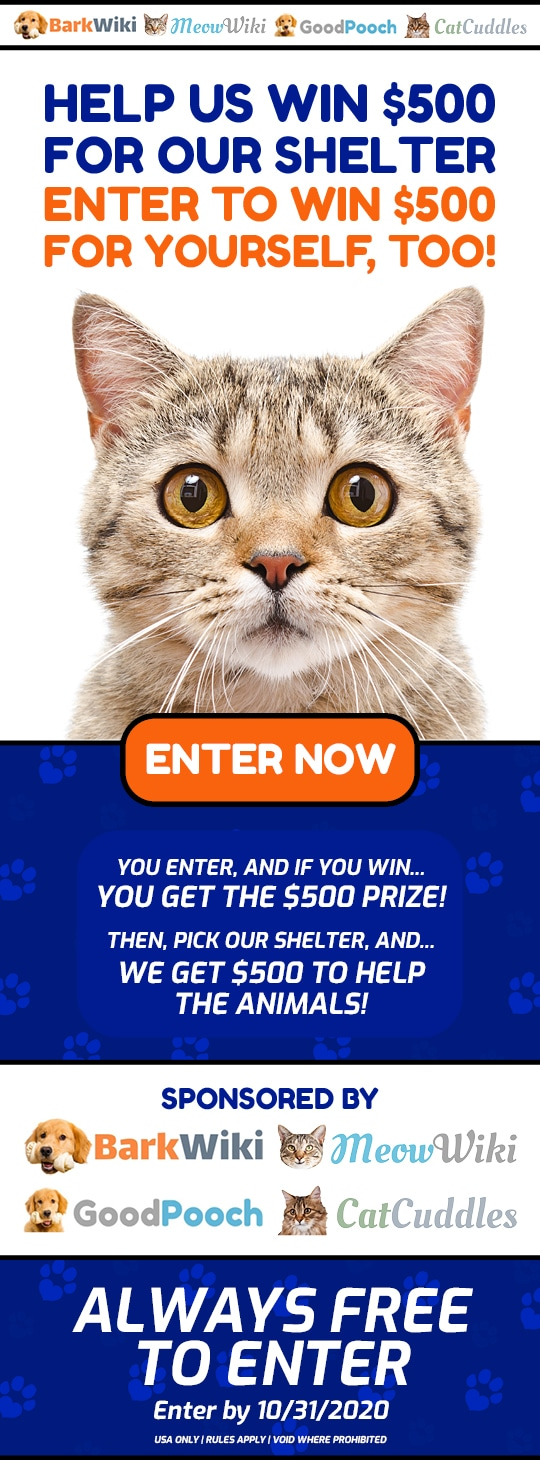 Animal Shelter Donation Cat Giveaway ~ Win $500 to Help the Animals + YOU GET A $500! Giveaway Image
