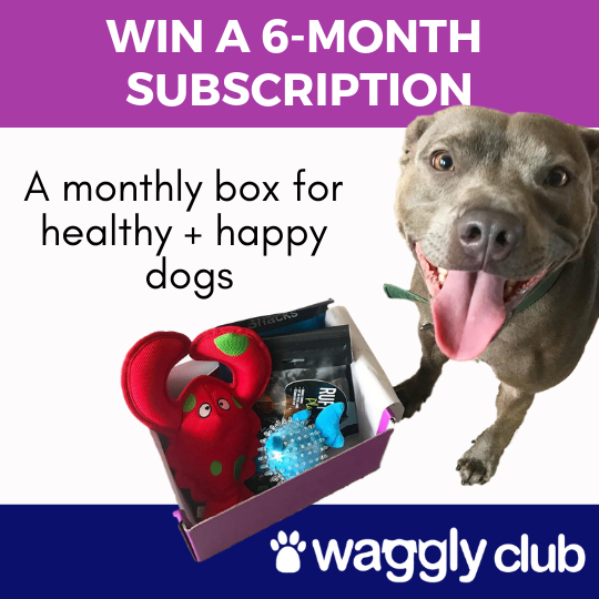Win a 6-month Waggly Club subscription Giveaway Image