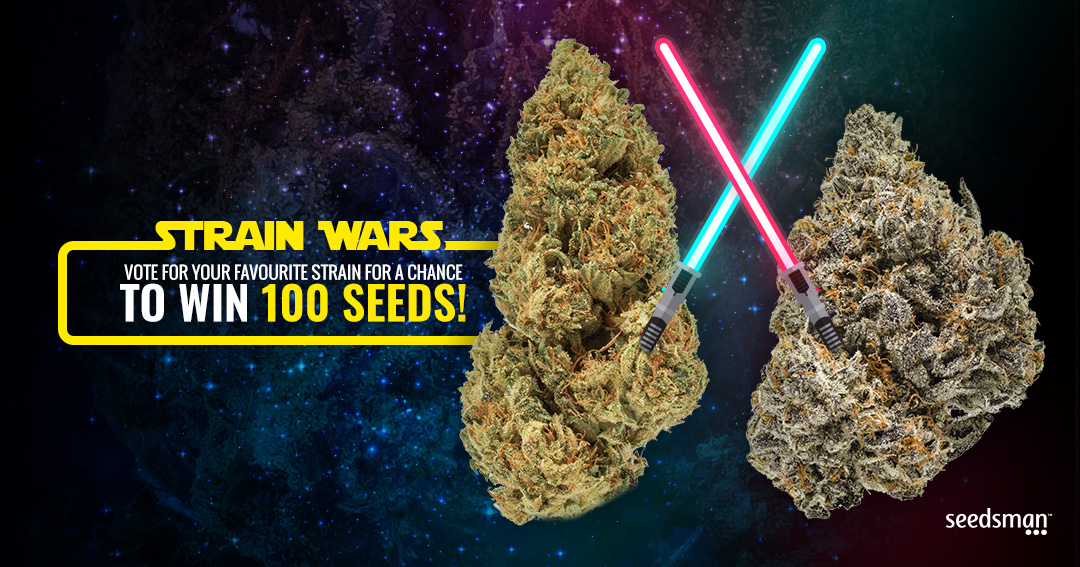 WIN 100 SEEDS!   (As Long as Your Country Allows Selling Seeds) Giveaway Image