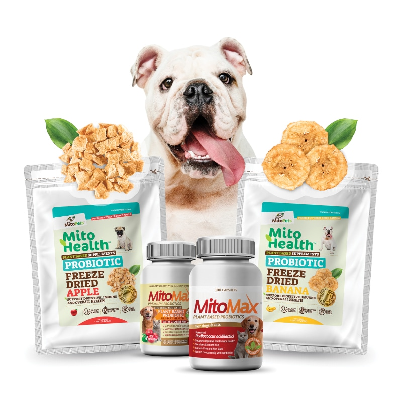 Enter to win an Imagilin Prize Pack that includes premium plant-based probiotics for your dog and for you. Courtesy of Modern Dog Magazine. 3 Winners! Giveaway Image