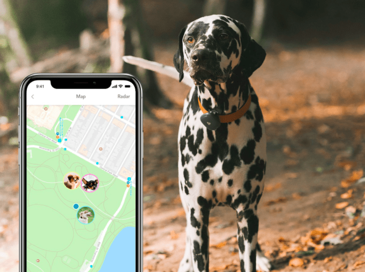 Smart Fitness Bands fur You & Pup! Giveaway Image
