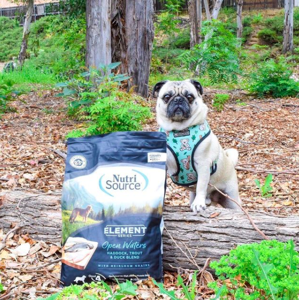 Enter to win 12# bag of Element Series dog food and 2 bags of Jerky treats. $100+ Value. 4 Winners! Giveaway Image