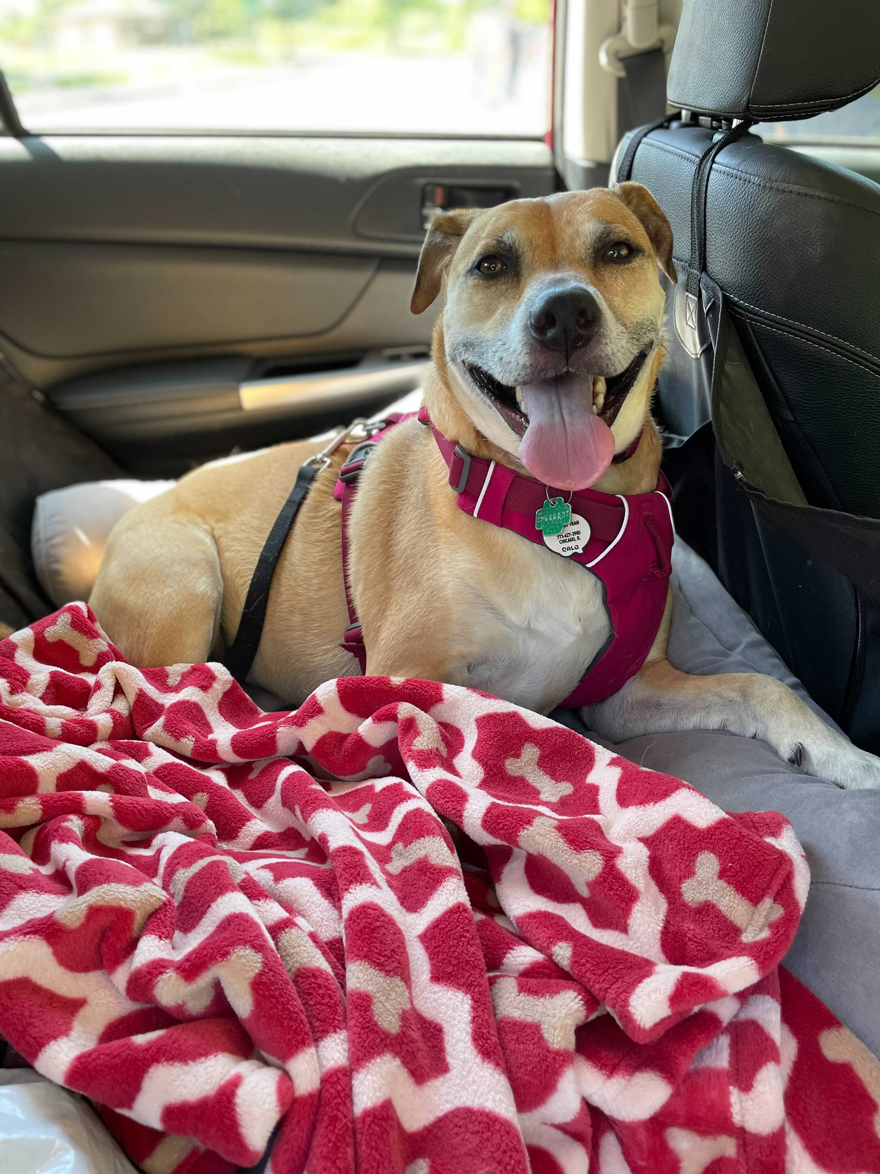 """Enter to win a 30"""" x 40"""" Tall Tails Comfort Blanket for Your Dog. Valued at $33 each. 10 Winners! Giveaway Image"""