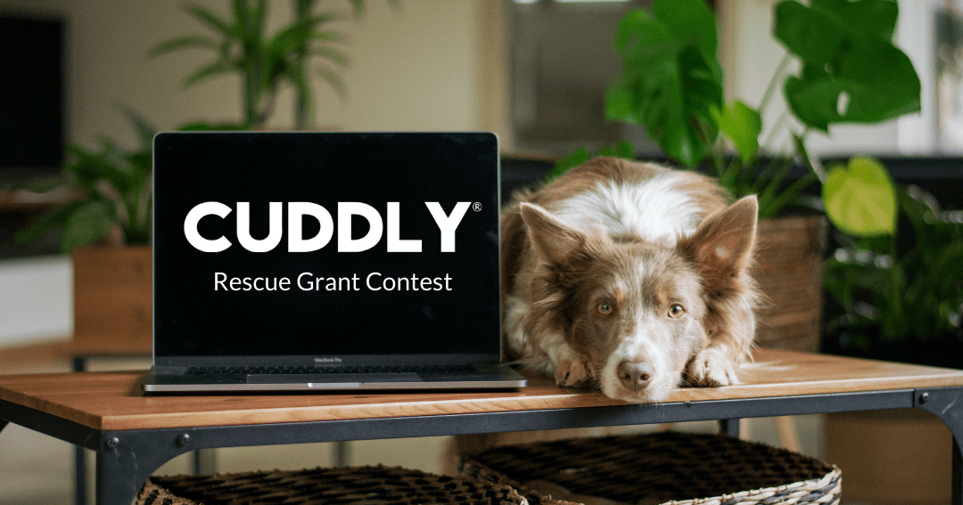 Win a $5000 grant to your favorite rescue! Giveaway Image