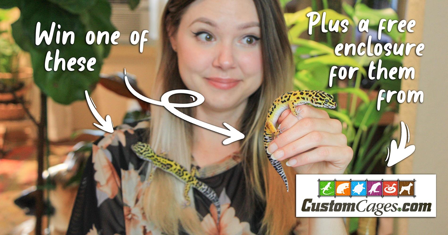 Jennifer Lynx & Custom Cages Leopard Gecko Giveaway Giveaway Image