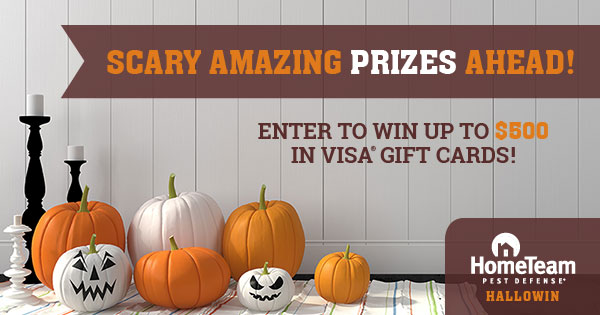 Win a $500 Visa® gift card or 1 of 10 $50 Visa® gift cards Giveaway Image