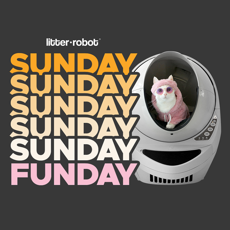 Win a Litter-Robot - February Giveaway Image